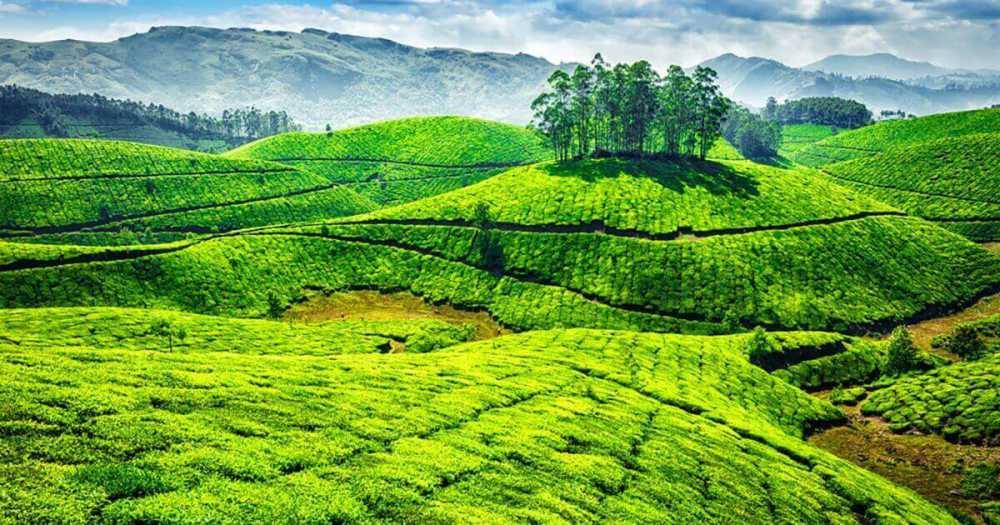 India del sud ad agosto posto da visitare nel sud dell for Interno delle piantagioni del sud