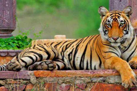 santuari della fauna selvatica in india