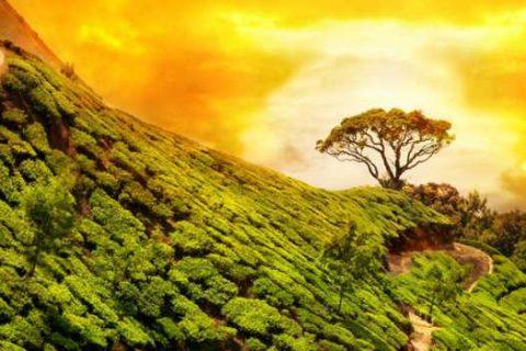alba e tramonto in india
