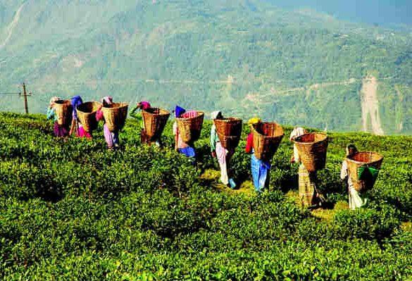 luoghi turistici a darjeeling