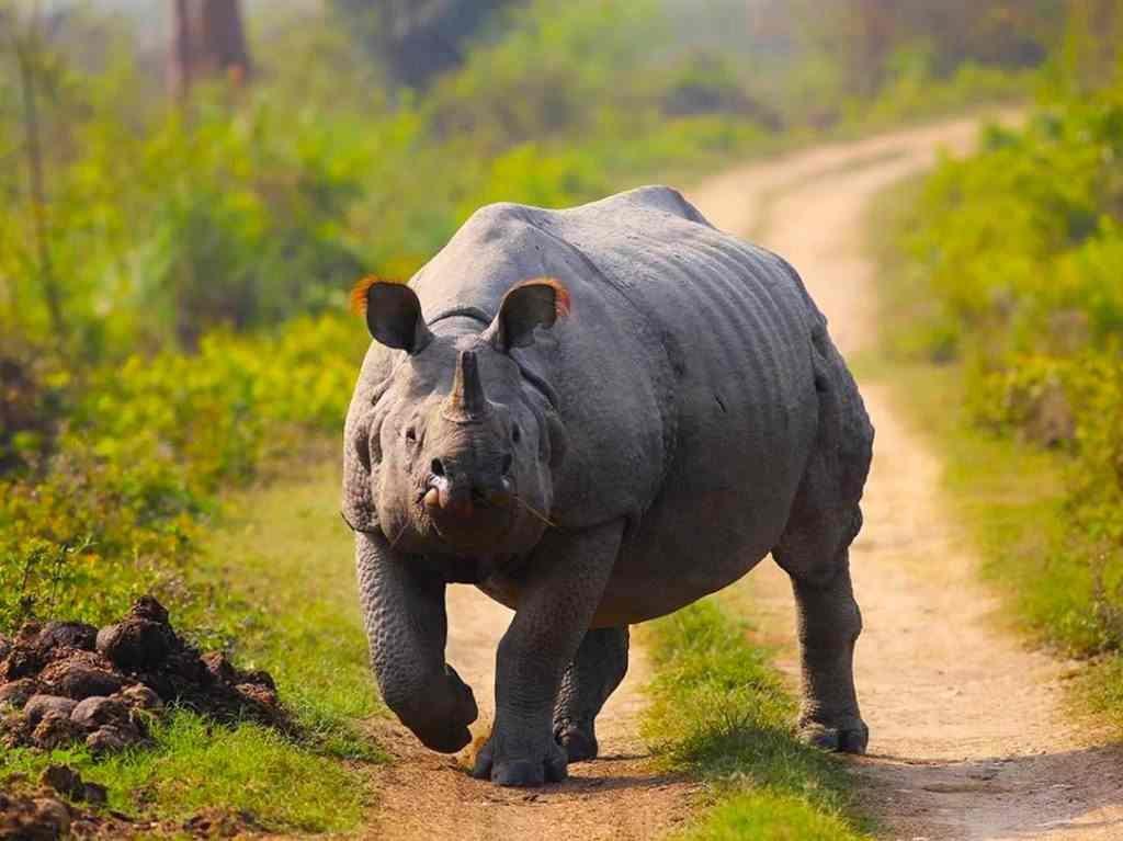 animali da vedere in india