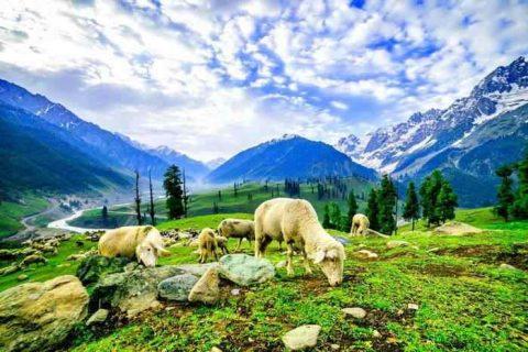 periodo migliore per visitare darjeeling
