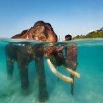 santuari della fauna selvatica dell india
